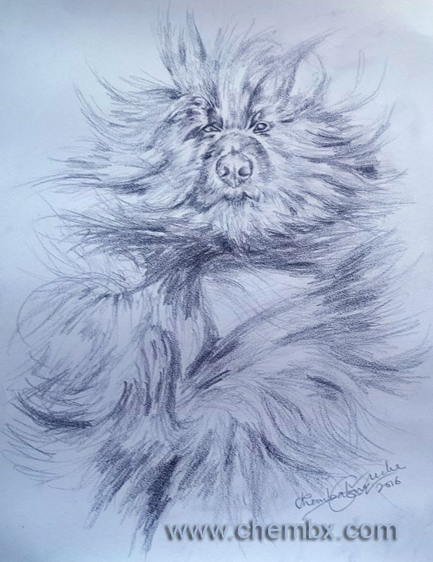 Pet pencil portrait artwork on card